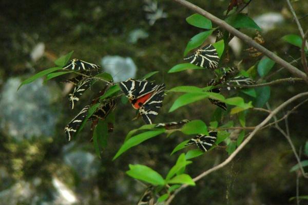sommerfugledalen rhodos